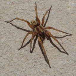 Уничтожение пауков в Краснодаре